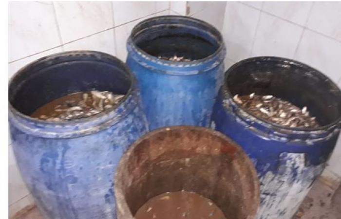 #اليوم السابع - #حوادث - صور.. ضبط أطنان من الأسماك الفاسدة قبل بيعها للمواطنين بالإسكندرية