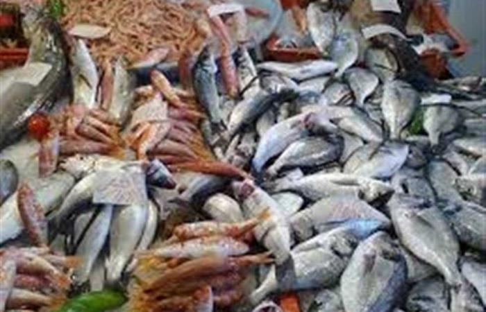 المصري اليوم - اخبار مصر- إعدام 40 كيلو أسماك فاسدة في سفاجا موجز نيوز