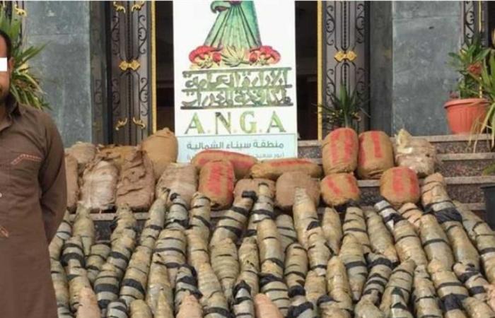 #المصري اليوم -#حوادث - ضبط نصف طن «بانجو» داخل مزرعة بالإسماعيلية موجز نيوز