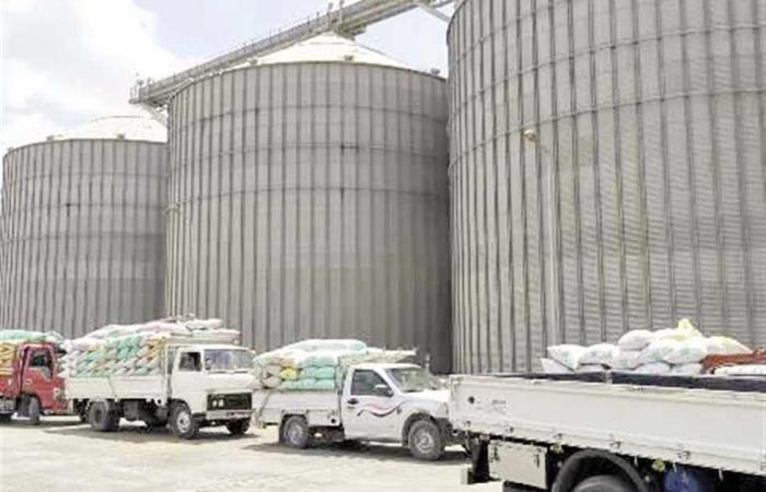المصري اليوم - اخبار مصر- شون المحافظات تواصل استقبال القمح من المزارعين موجز نيوز