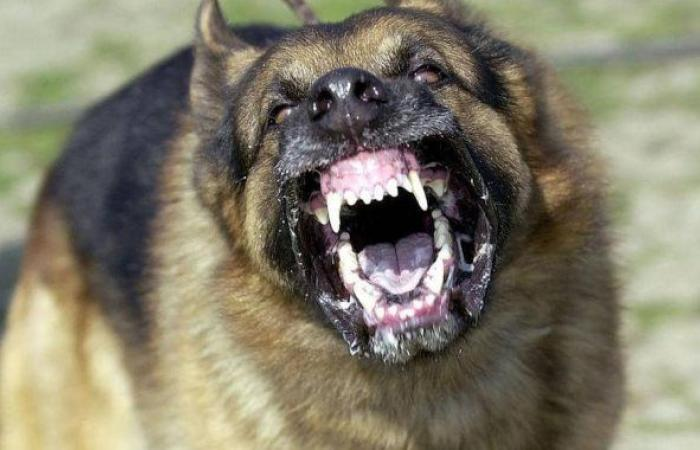 الوفد -الحوادث - مصرع شخص وإصابة 4 آخرين فى مشاجرة بسبب عقر كلب لمواطن بالبساتين موجز نيوز