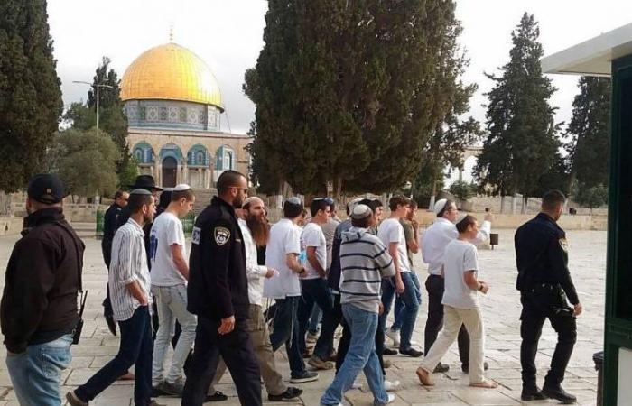 تدنيس جماعي للأقصى.. لماذا كثف الصهاينة اقتحاماتهم لمسرى النبي؟ (فيديو)