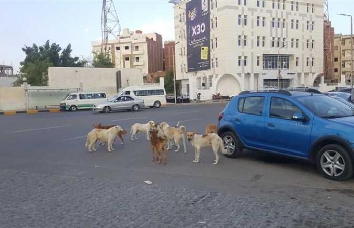 #المصري اليوم -#حوادث - «الكلاب الضالة» تهاجم المواطنين في 6 أكتوبر موجز نيوز