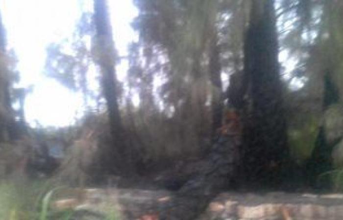 #اليوم السابع - #حوادث - صور.. حريق يلتهم 20 فدان نخيل وأشجار بأسيوط