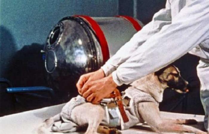 اخبار السياسه الكلبة لايكا.. 63 عاما على إطلاق أول كائن للفضاء
