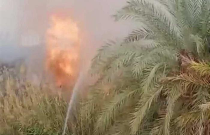 #المصري اليوم -#حوادث - حريق مزرعة نخيل في واحة سيوة (صور) موجز نيوز