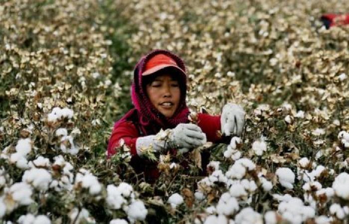 بسبب مسلمي الأويغور.. أمريكا تحظر استيراد المنتجات القطنية من شركة صينية