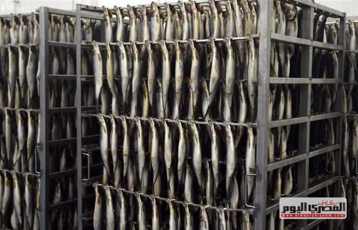 المصري اليوم - اخبار مصر- وزير الزراعة: حققنا 85% من الاكتفاء الذاتي من الأسماك واستوردنا 325 ألف طن فقط موجز نيوز