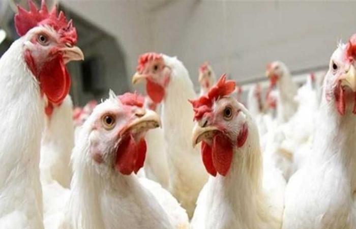 #المصري اليوم - مال - تعرف على أسعار المواد الغذائية بالبحيرة اليوم موجز نيوز