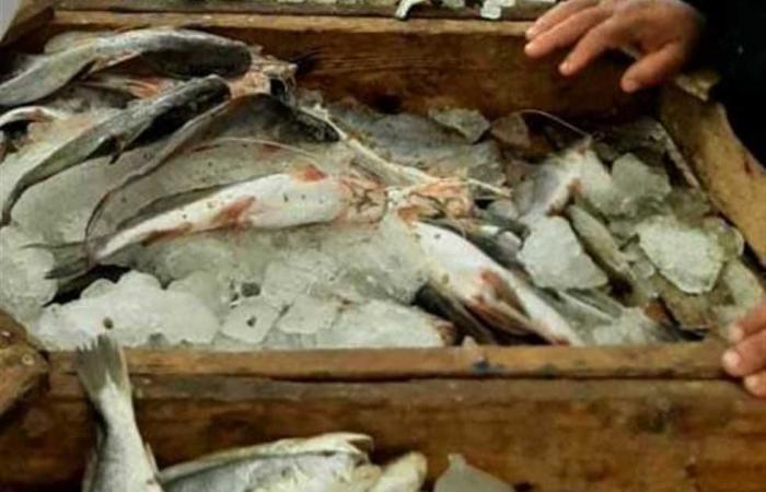 #المصري اليوم -#حوادث - «بيطري الشرقية»: ضبط لحوم وأسماك غير صالحة وتحرير 31 محضرًا موجز نيوز