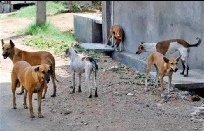 #المصري اليوم -#حوادث - شنق كلب ضال .. الداخلية تكشف تفاصيل القبض علي حارس عقار في المقطم موجز نيوز