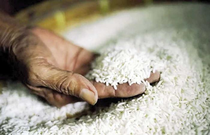 #المصري اليوم - مال - «صناعة الحبوب»: مبادرة لتخفيض أسعار الأرز 20% موجز نيوز
