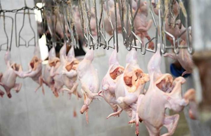 المصري اليوم - اخبار مصر- قنا : طرح ٢٥ ألف دجاجة ومنتجاتها بأسعار مخفضة موجز نيوز