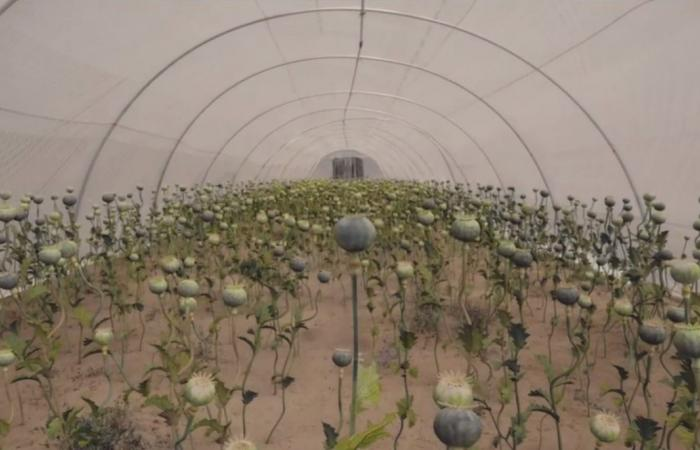 #اليوم السابع - #فن - مسلسل لعبة نيوتن.. تامر محسن يستخدم النحل فى جرائم قتل ومخدرات