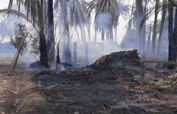 #المصري اليوم -#حوادث - السيطرة على حريق بأرض زراعية في إهناسيا موجز نيوز