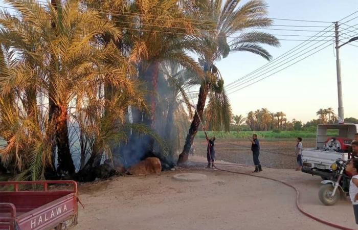 #المصري اليوم -#حوادث - السيطرة على حريق بزراعات النخيل بمنطقة المهيدات بالطود جنوب الأقصر موجز نيوز