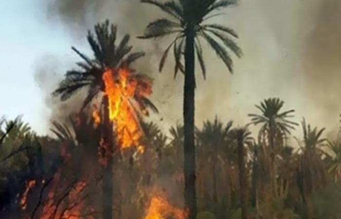 الوفد -الحوادث - السيطرة على حريق مزارع نخيل بقرية الجديدة في الوادي الجديد موجز نيوز